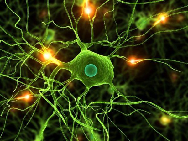 The constant gardeners: il ruolo della microglia