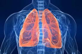 Staminali da cordone per 'pulire' i polmoni da fibrosi