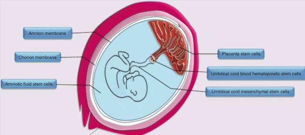 Oggi parliamo di cellule perinatali